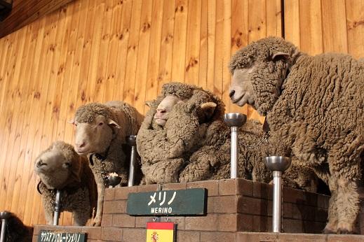 マザー牧場:シープショー 羊3