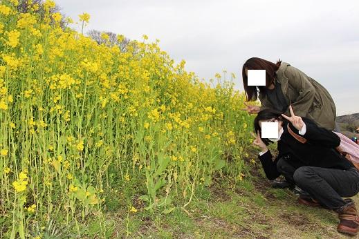 マザー牧場:菜の花5