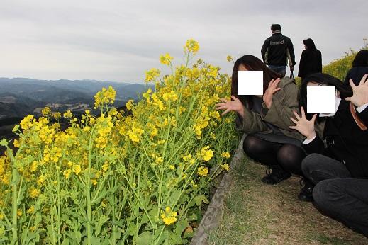 マザー牧場:菜の花6