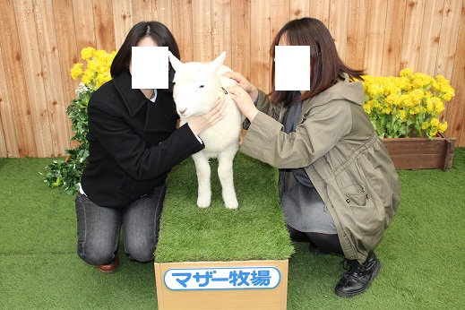 マザー牧場:子羊記念写真