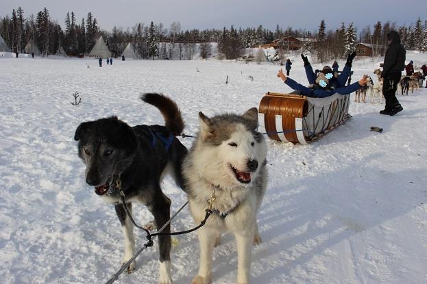 2015カナダ:0211イエローナイフ 犬ぞり