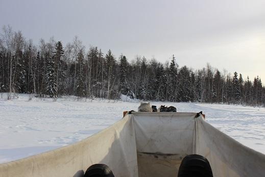 2015カナダ:0211イエローナイフ 犬ぞり3