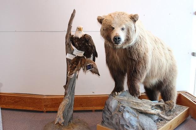 2015カナダ旅行:0212イエローナイフ 観光所 クマ