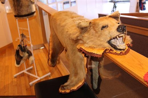 2015カナダ旅行:0212イエローナイフ 観光所 クマ2