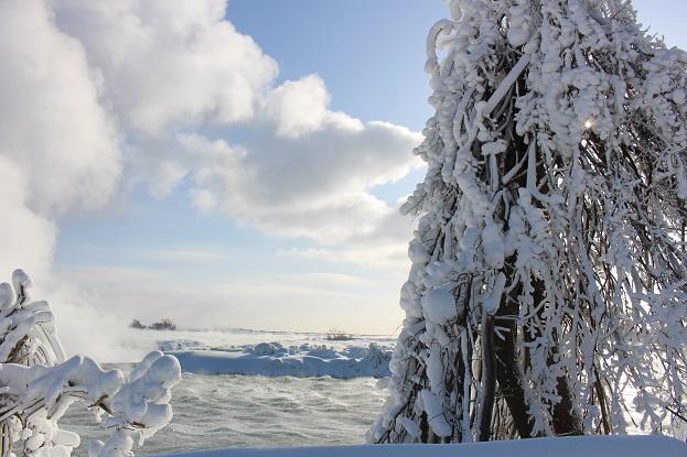 2015カナダ旅行:0213トロント テーブルロック 木