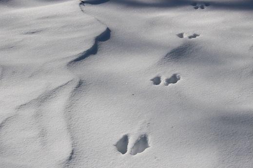 2015カナダ旅行:0213トロント ナイアガラオンザレイク 雪 足跡