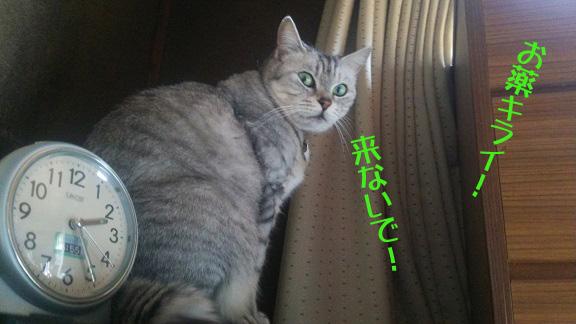 DSC_027001.jpg