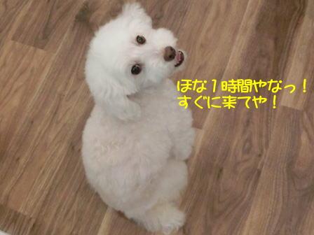 b0136.jpg