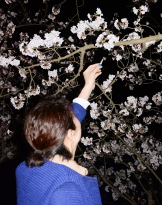 150329夜桜04_035