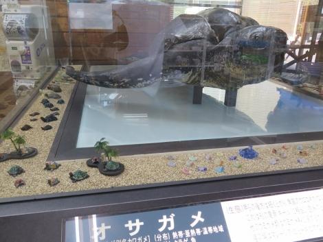 道の駅『紀宝町ウミガメ公園』オサガメ剥製