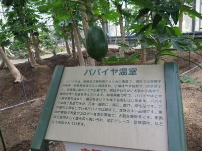 フルーツパーク バナナとパパイヤの温室