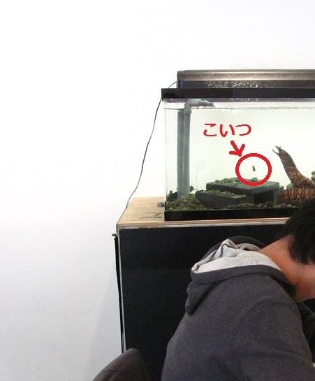 学生と水槽2