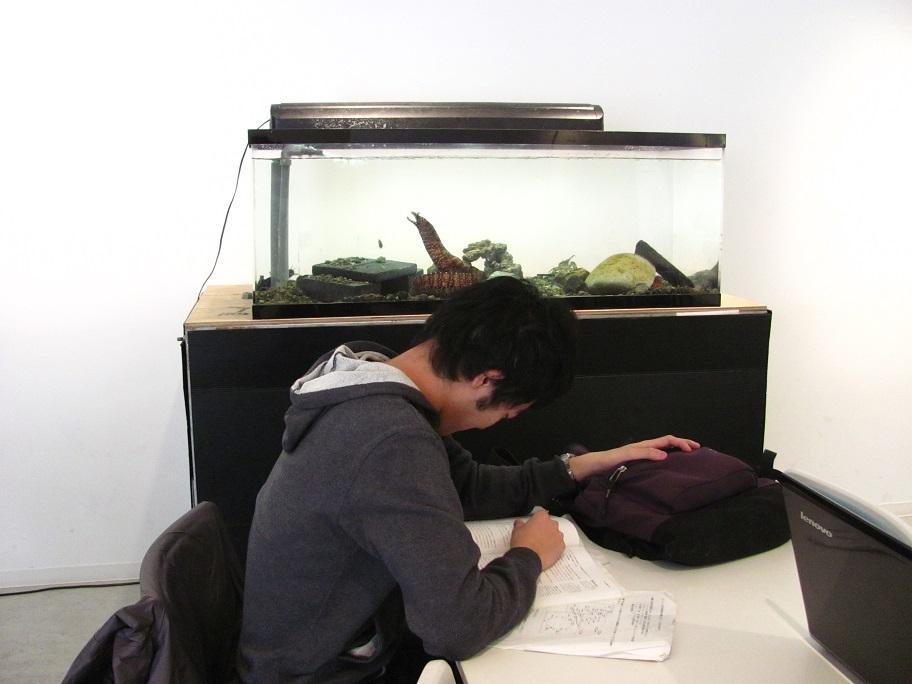 学生と水槽1