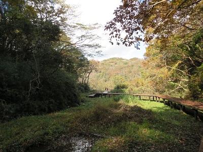 小網代の森2
