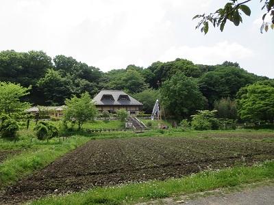 座間谷戸山公園 田んぼ