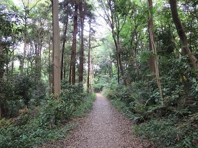 座間谷戸山公園 道