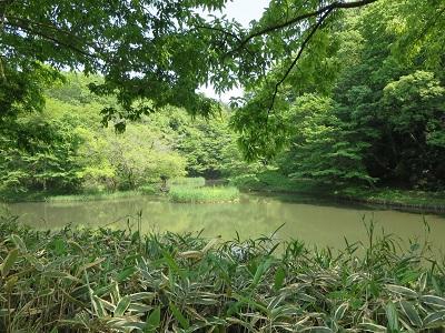 座間谷戸山公園 池