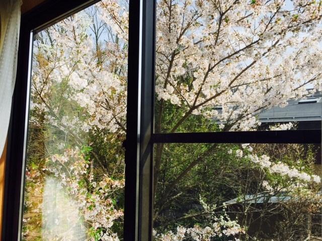 窓からお花見