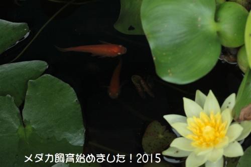 IMG_2114.jpg