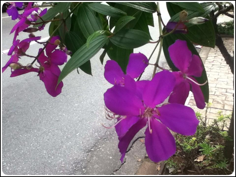 ズームピンク花