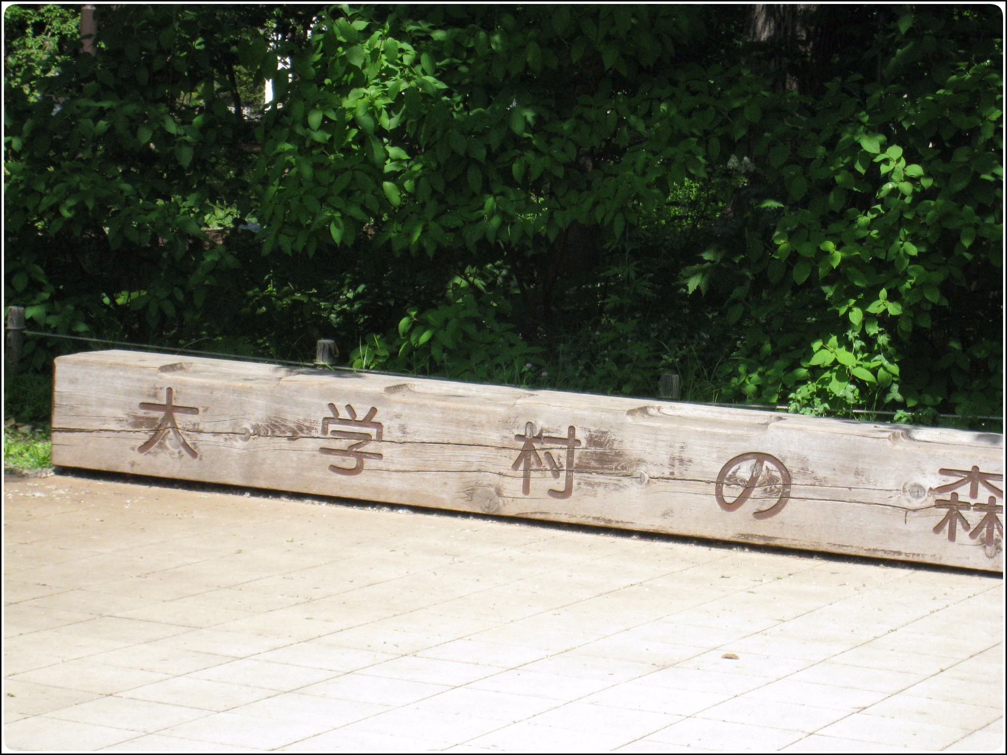 daigakumorinomura_602.jpg