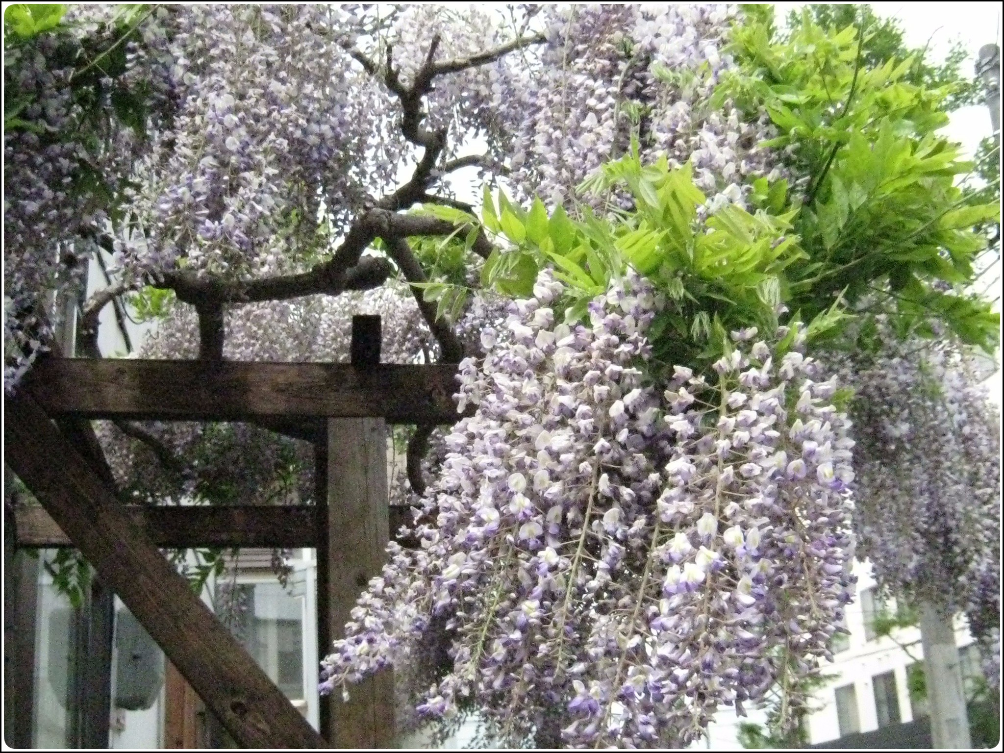 fuji_527.jpg