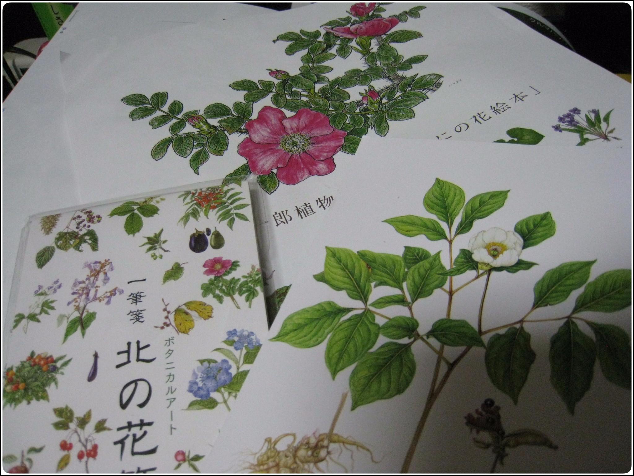 plant_drawing_626.jpg