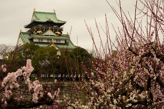 2015年3月8日撮影 大阪・大阪城梅林の梅1