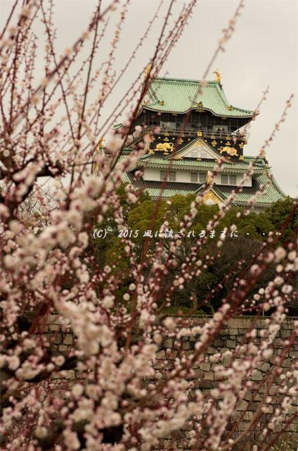 2015年3月8日撮影 大阪・大阪城梅林の梅2