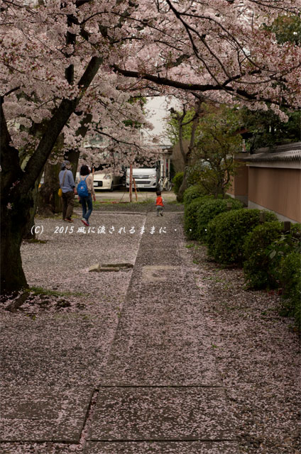 【2015年桜を求めて・・・】 京都・妙蓮寺 桜2