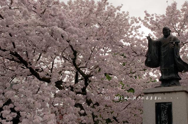 【2015年桜を求めて・・・】 京都・妙蓮寺 桜3