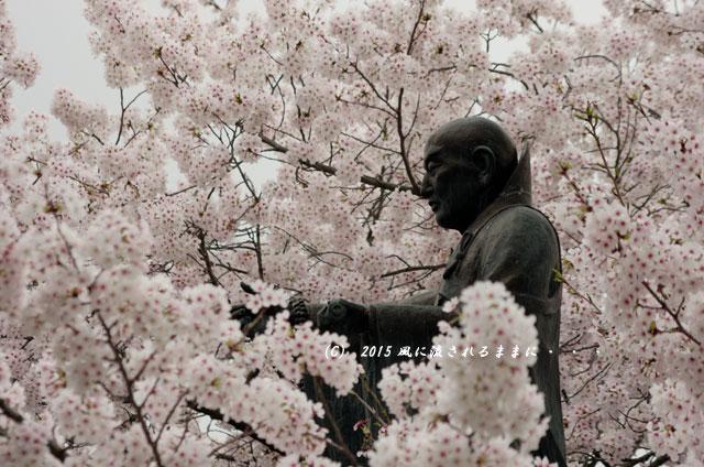 【2015年桜を求めて・・・】 京都・妙蓮寺 桜5