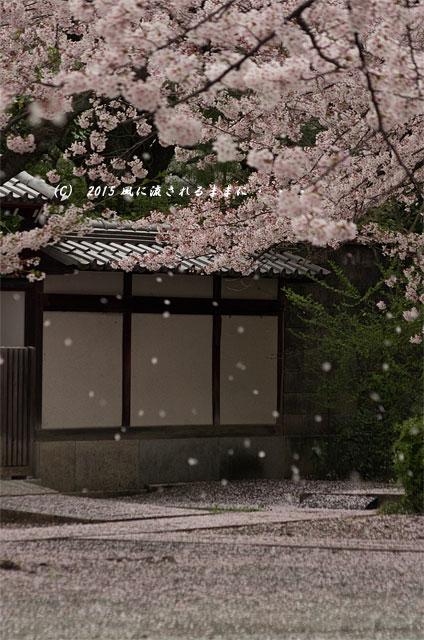 【2015年桜を求めて・・・】 京都・妙蓮寺 桜8