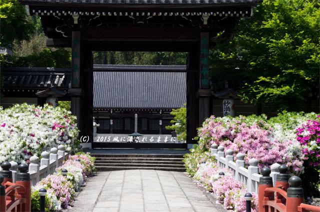 2015年5月 京都・妙満寺のツツジ4
