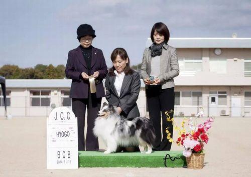 2014-11-16JCC兵庫 サラBCB1席-1