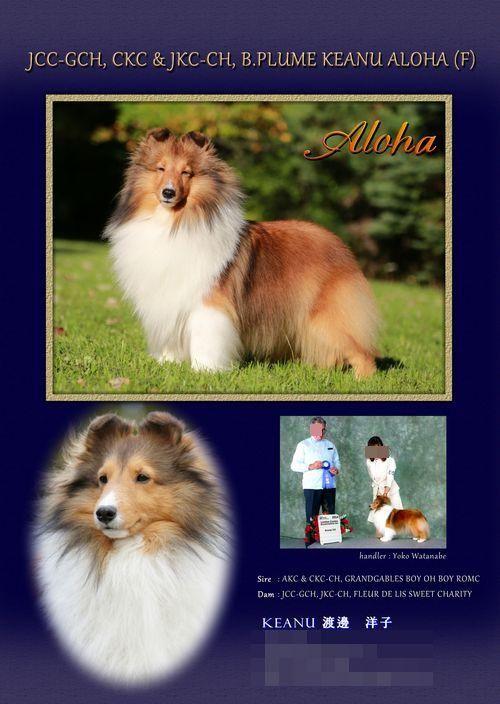 aloha2オリジナル採用+-+コピー_convert_20150310171454