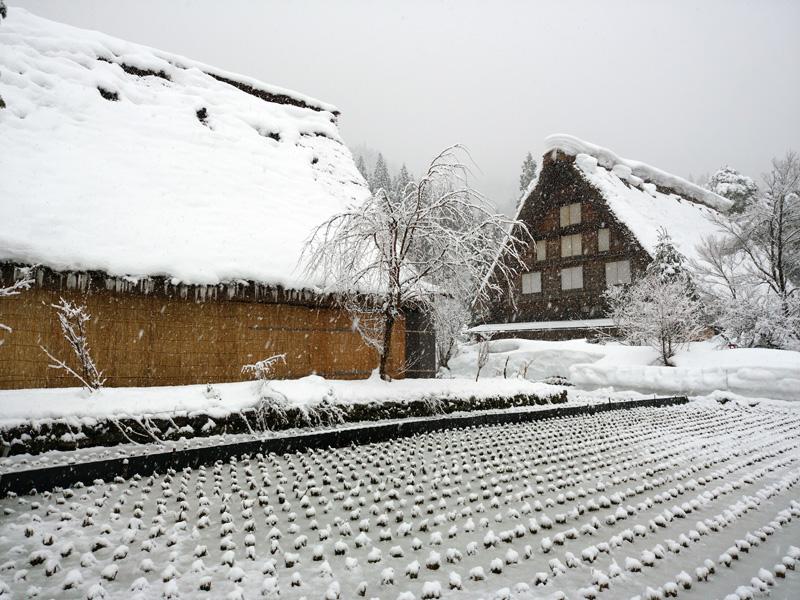 冬の白川郷は寒い、でも、静けさの中だからこそ ⑤