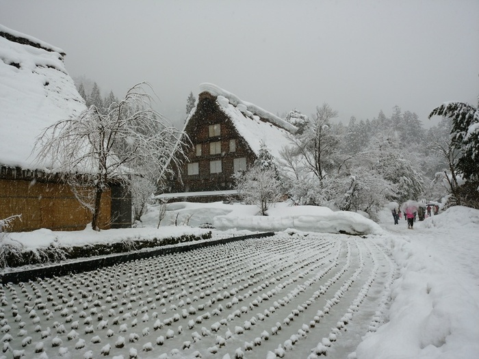 厳しい冬ももう少し 白川郷 ③