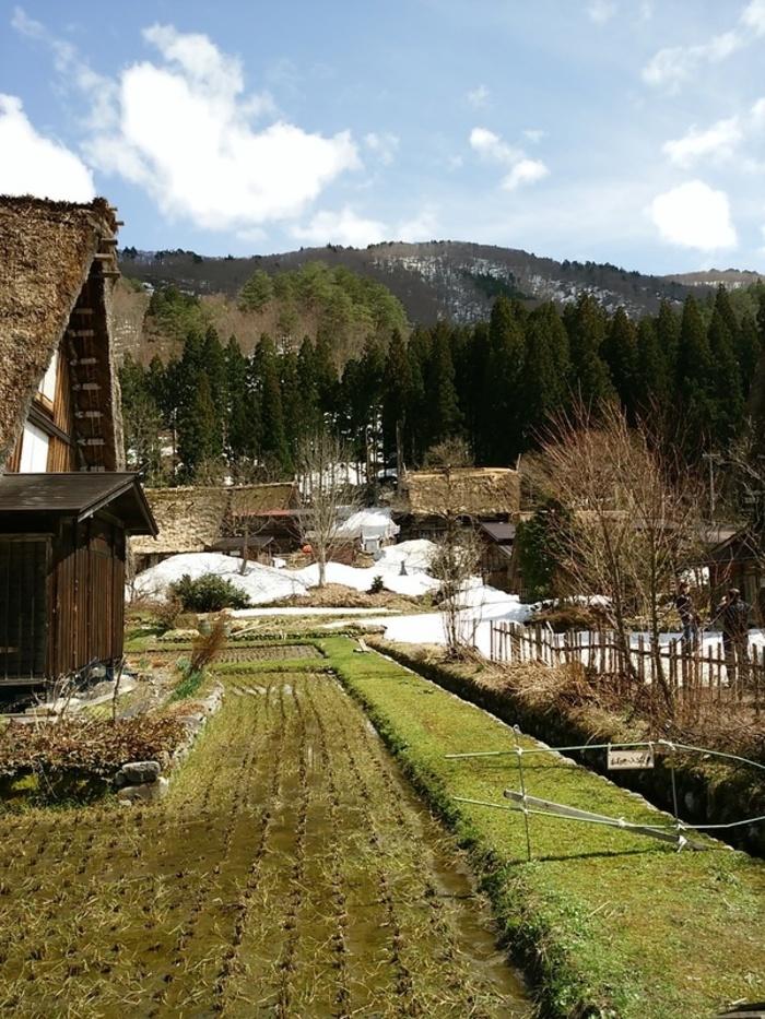 季節の移ろいを五感で感じる春季お気軽温泉!白川郷の旅へ! ②