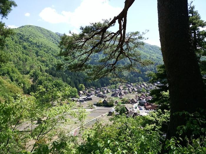 新緑初夏の白川郷を観光 ②