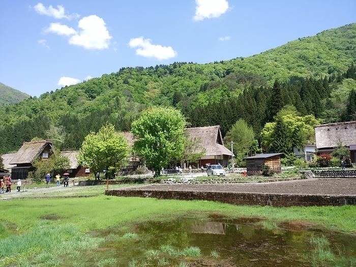 初夏の涼しい白川郷では合掌集落内のお散歩や白川村周遊、展望台の眺めなど気持ちのいい季節 ⑤