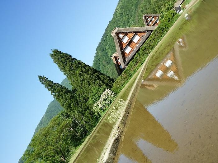 田植えの時期、水が張られた水田に合掌造りが綺麗に ②