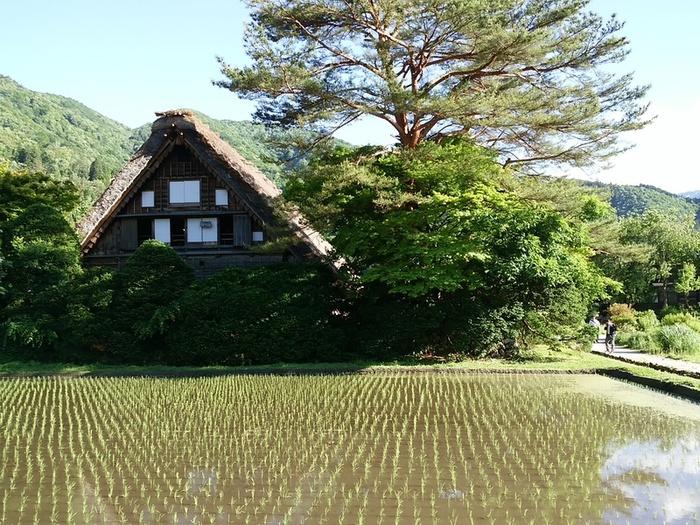 想像を遥かに超える幻想的な風景を楽しむなら,世界遺産 白川郷 ⑤