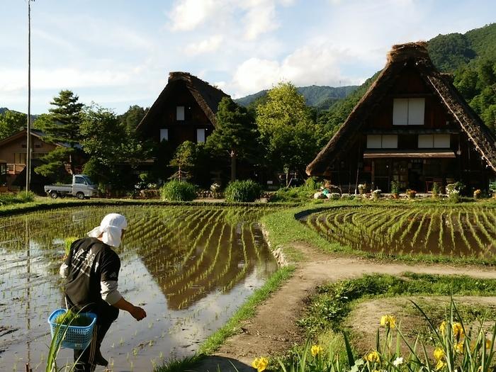 本格的な夏が来る前に白川郷へ行こう!! ②