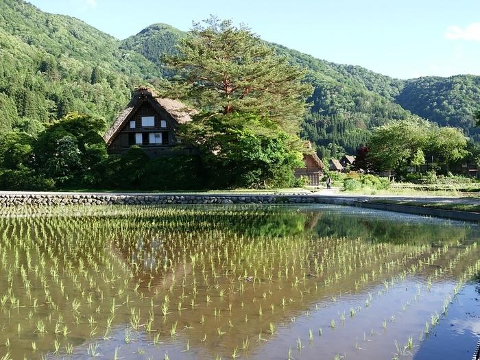 本格的な夏が来る前に白川郷へ行こう!! ⑤