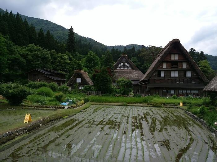 白川郷の旅 わいわい楽しんで、梅雨のジメジメを吹き飛ばしちゃいましょう!  ②