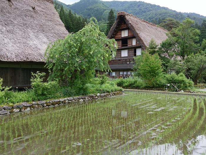 白川郷の旅 わいわい楽しんで、梅雨のジメジメを吹き飛ばしちゃいましょう!  ③