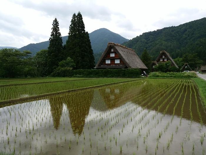 白川郷の旅 わいわい楽しんで、梅雨のジメジメを吹き飛ばしちゃいましょう!  ⑥