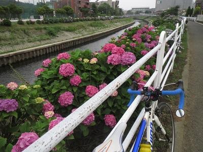 20150613_022.jpg