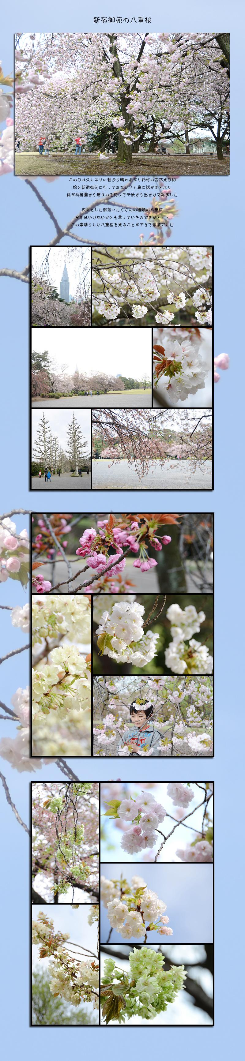 4月18日新宿御苑1